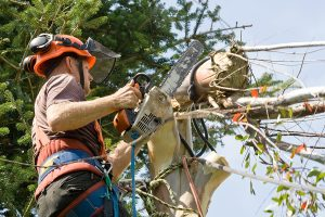 Baumfällungen/Holzspaltung